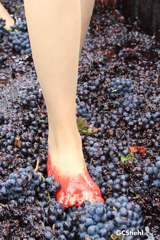 Wine Vendimia